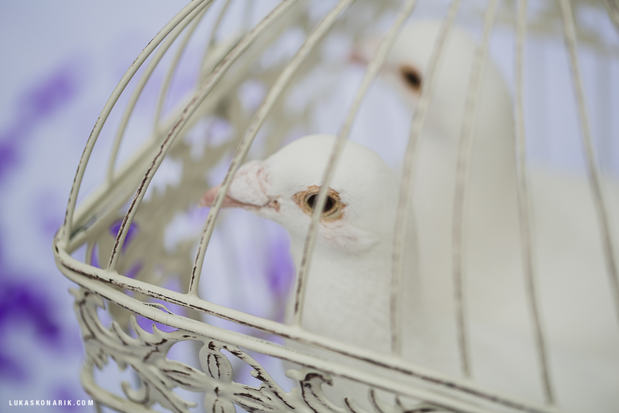 svatební holuice
